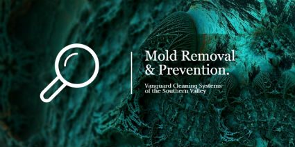 Cleaning Services and Mold Removal and Prevention